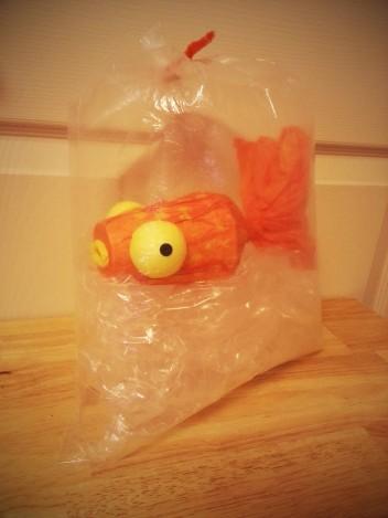 Day 5 Goldfish